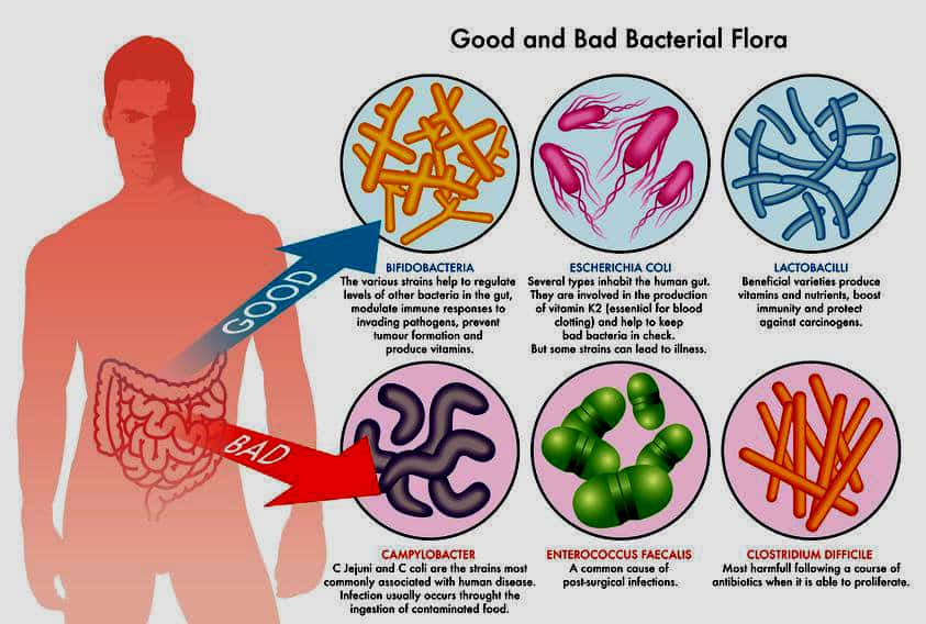 good and bad gut flora